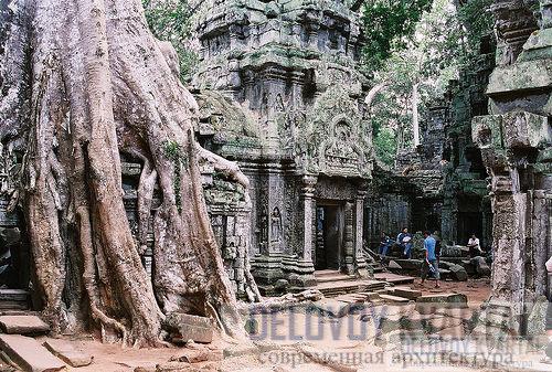 Храм скрывают под собой огромные корни деревьев.
